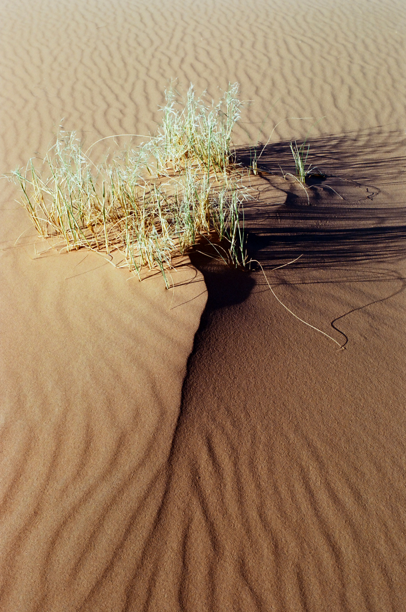 Plant and Long Shadow in Sand_Sahara_web.jpg