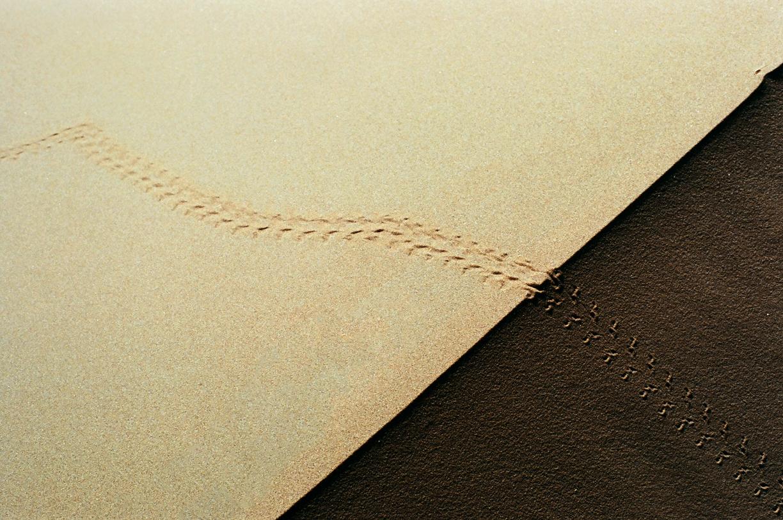 Beetle Foot Tracks in Sand at crest of dune_Sahara_web.jpg