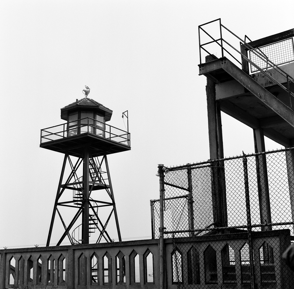 Guard Tower and Seagull_Alcatraz_web.jpg