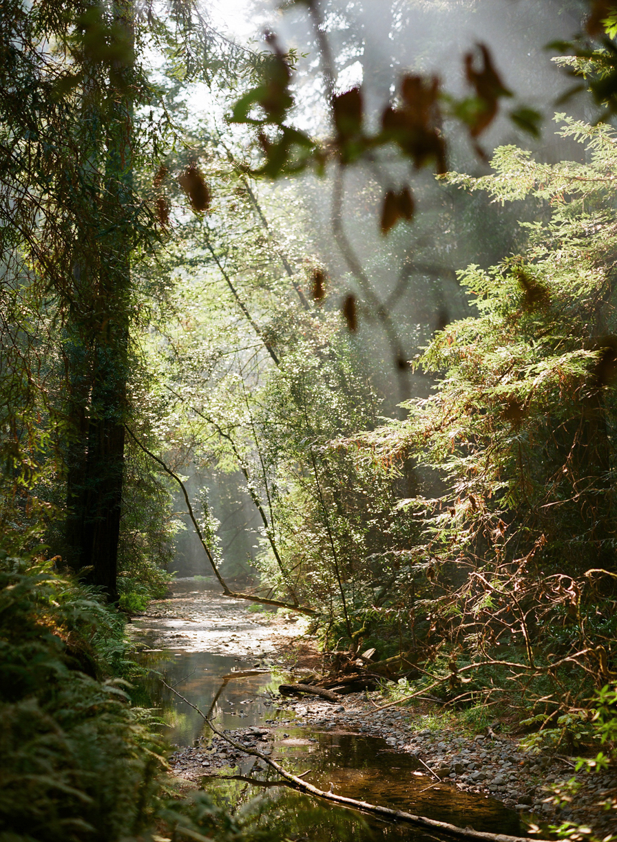 Light Coming Down on Stream in Muir Woods_vertical_web.jpg