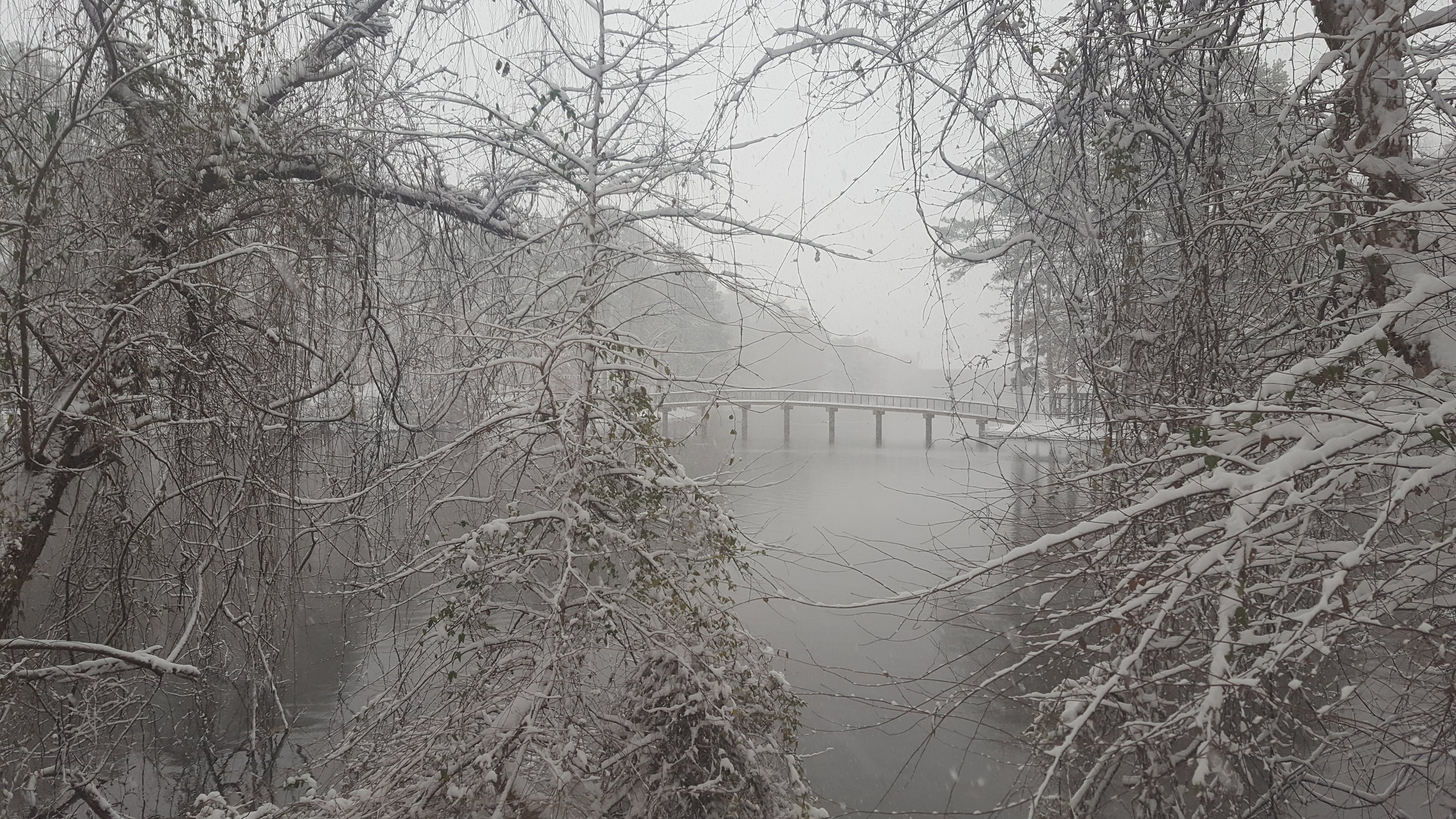 A rare, snowy December day at the University of Richmond (Source: M Zimmerman)