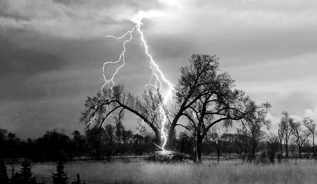 Tree explodes after being struck by a terrifying lightning. Photo: Schmidtfamilynews