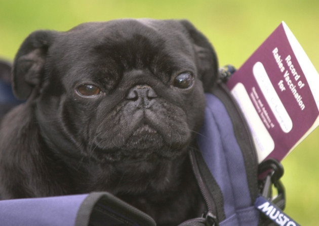 Going Abroad - What your pet needs to travel with you.