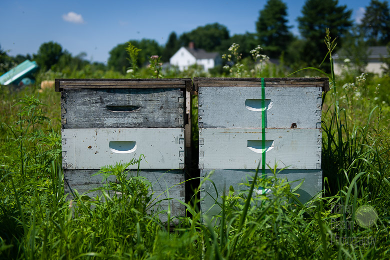 Merrimack Valley Apiaries