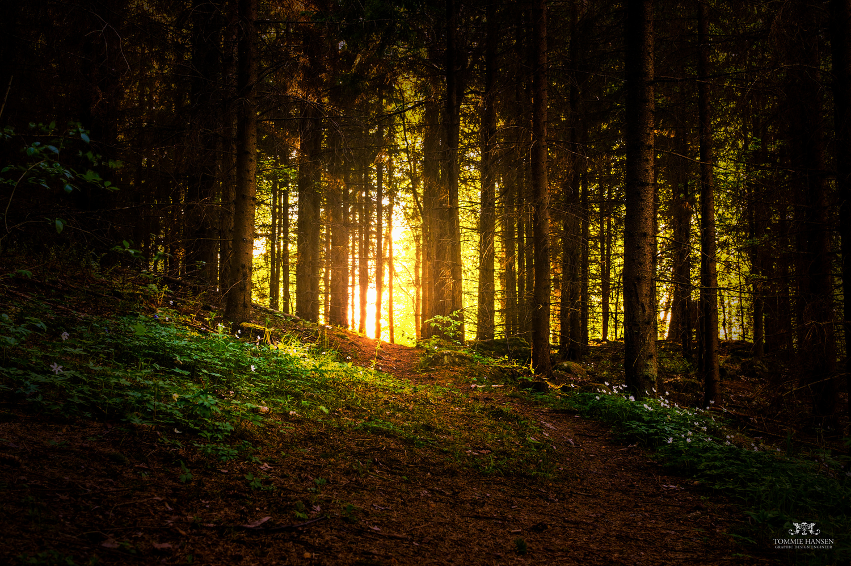 Light and forest at Isblandskärret, Djurgården (Stockholm/Sweden)  via  Photopin   (cc)