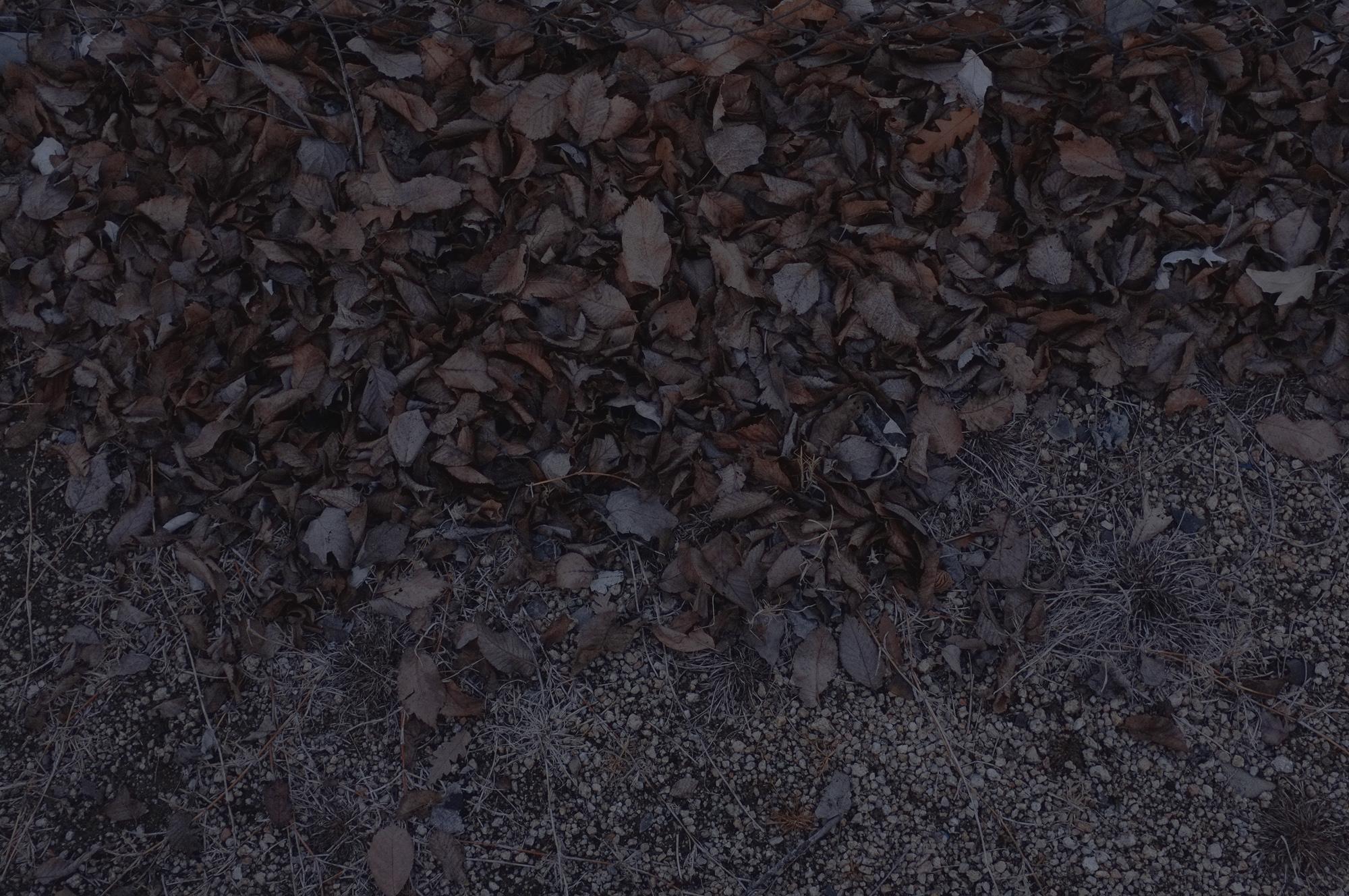 YTYKY_SAMMBLAKE_EASTERLYWINDS_015.jpg