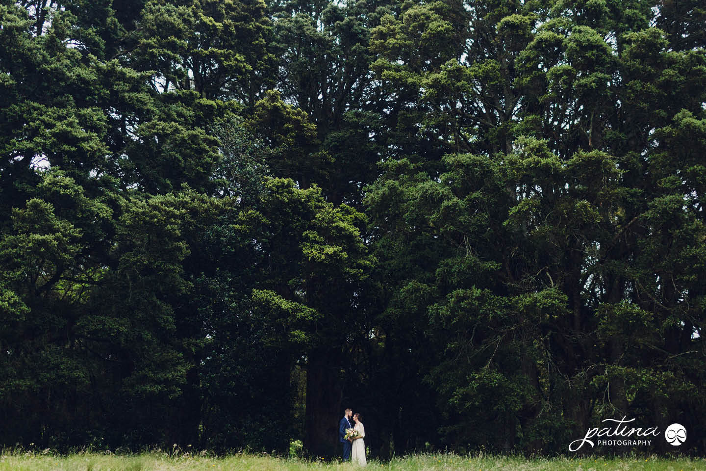 New Plymouth Forest wedding photos