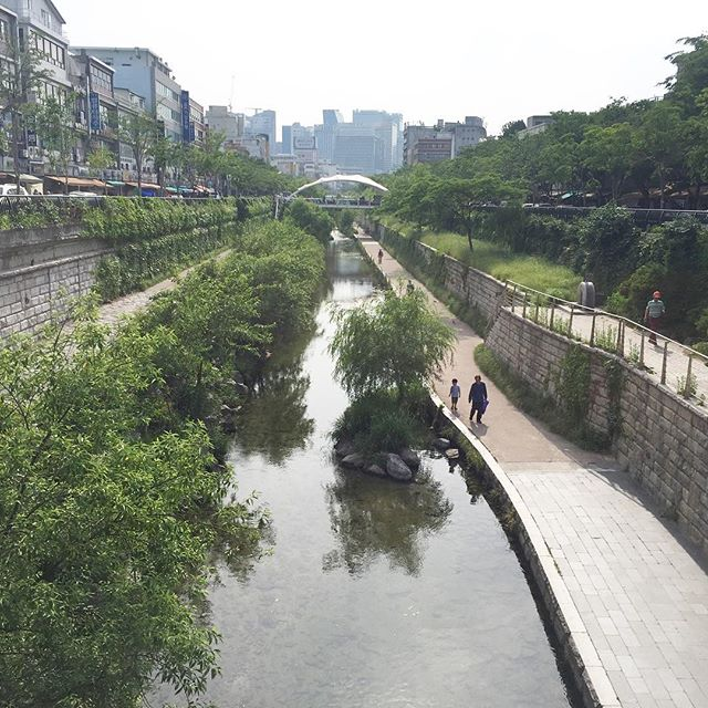 A break from the hustle & bustle of the korean traditional markets . . . #bitatravels #seoul #manmade #urbangreenspace