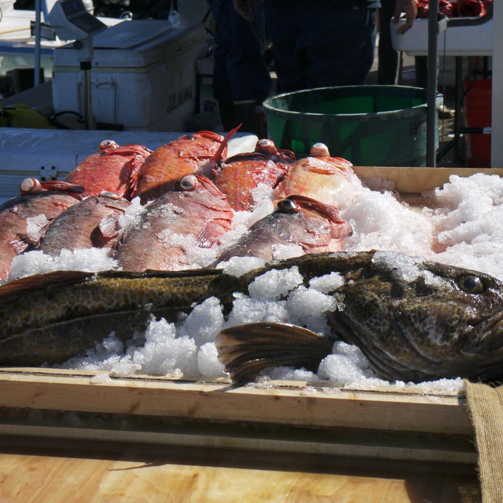 2014-08-16 THDM-fish!.jpeg