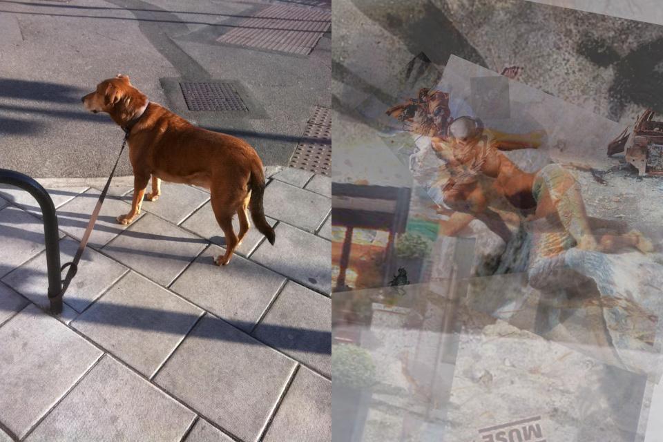 Googlology-5-A-Dog1.jpg