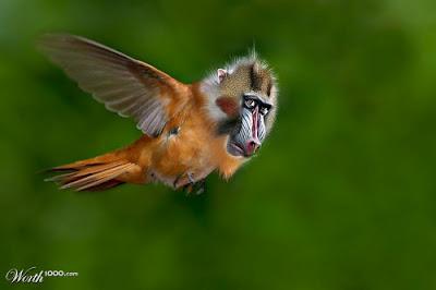 funny-bizarre-animal-blends-photo-manipulation-monkey-bird-7.jpeg