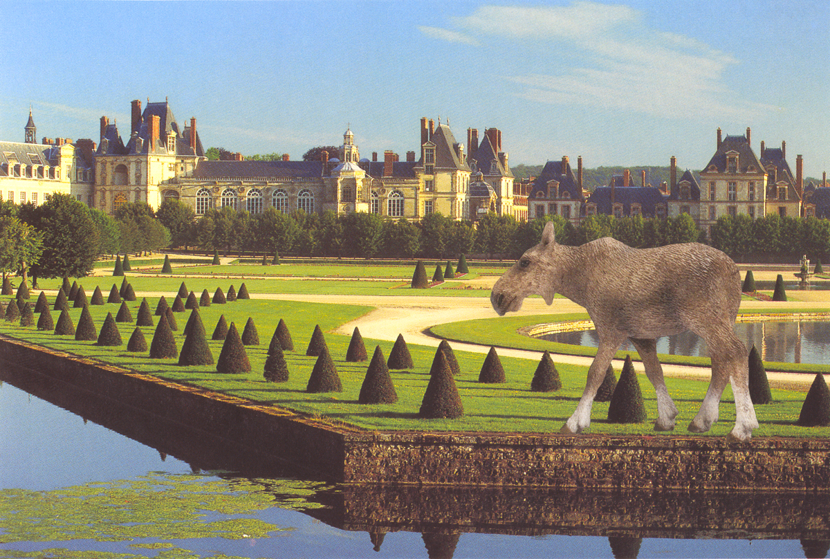 Moose Cow at Fontainebleau