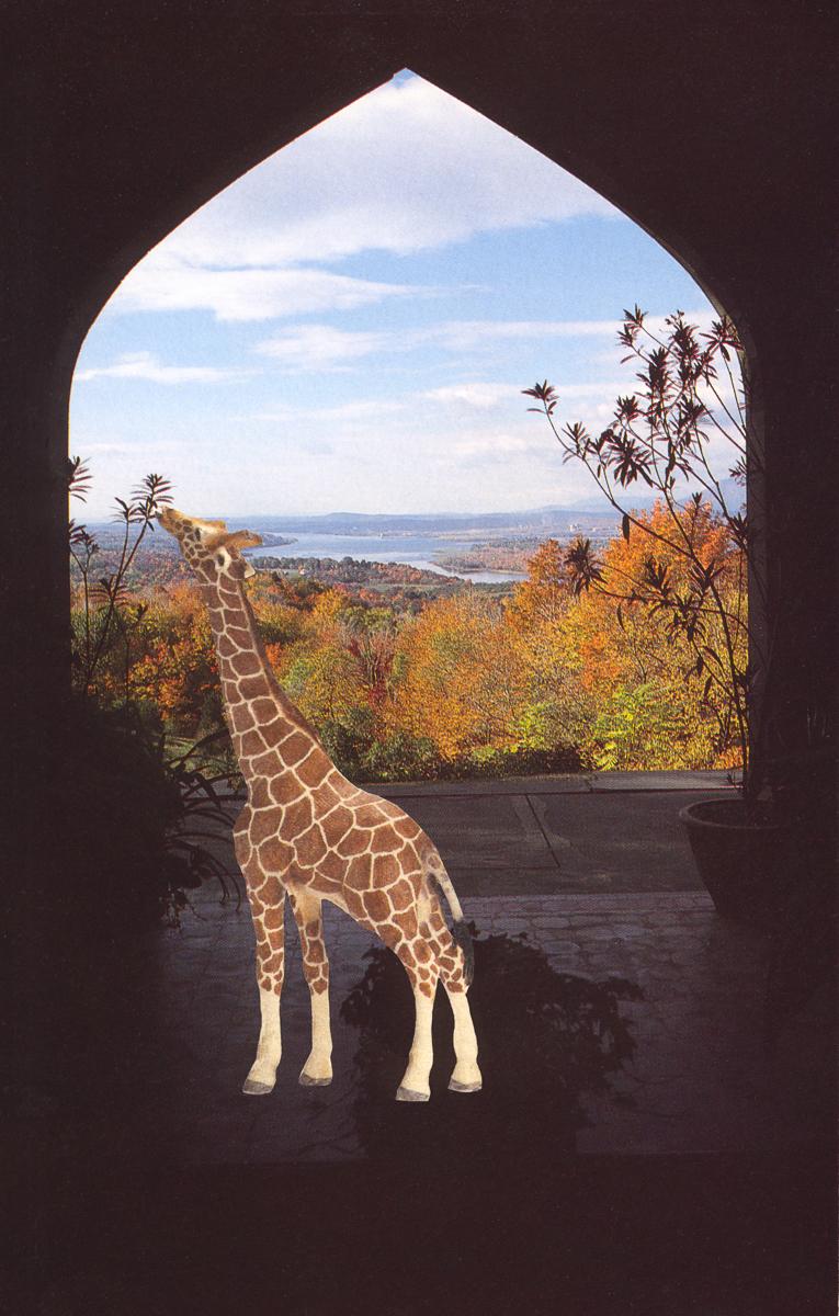 Giraffe at Olana