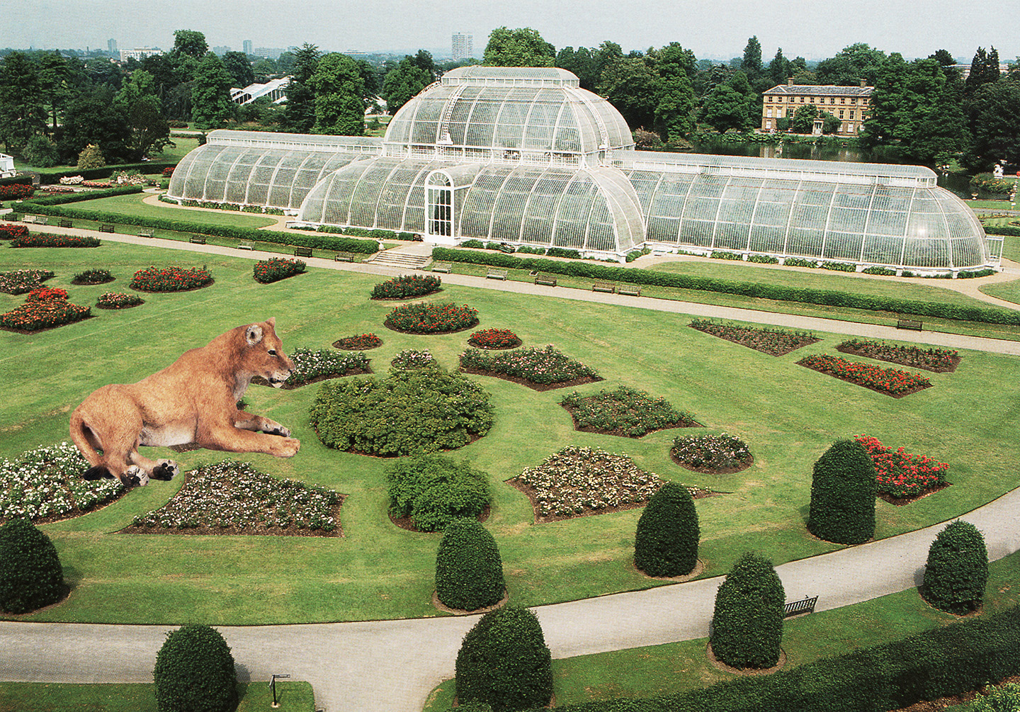 Lioness at Kew Gardens