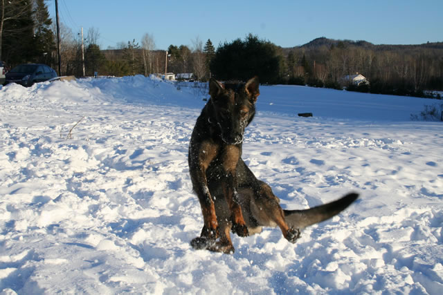 dogs 065.jpg