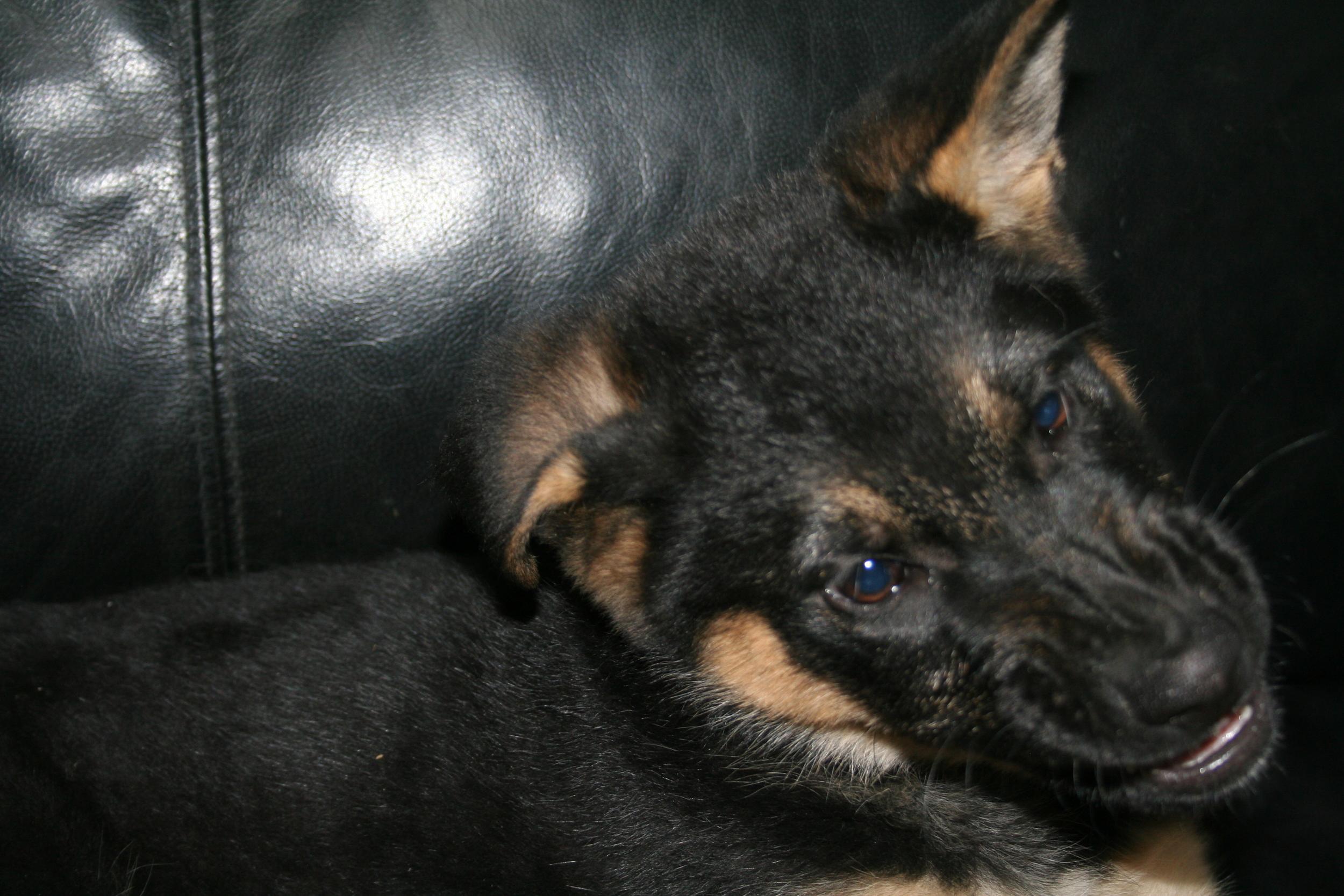 Pups 044.JPG