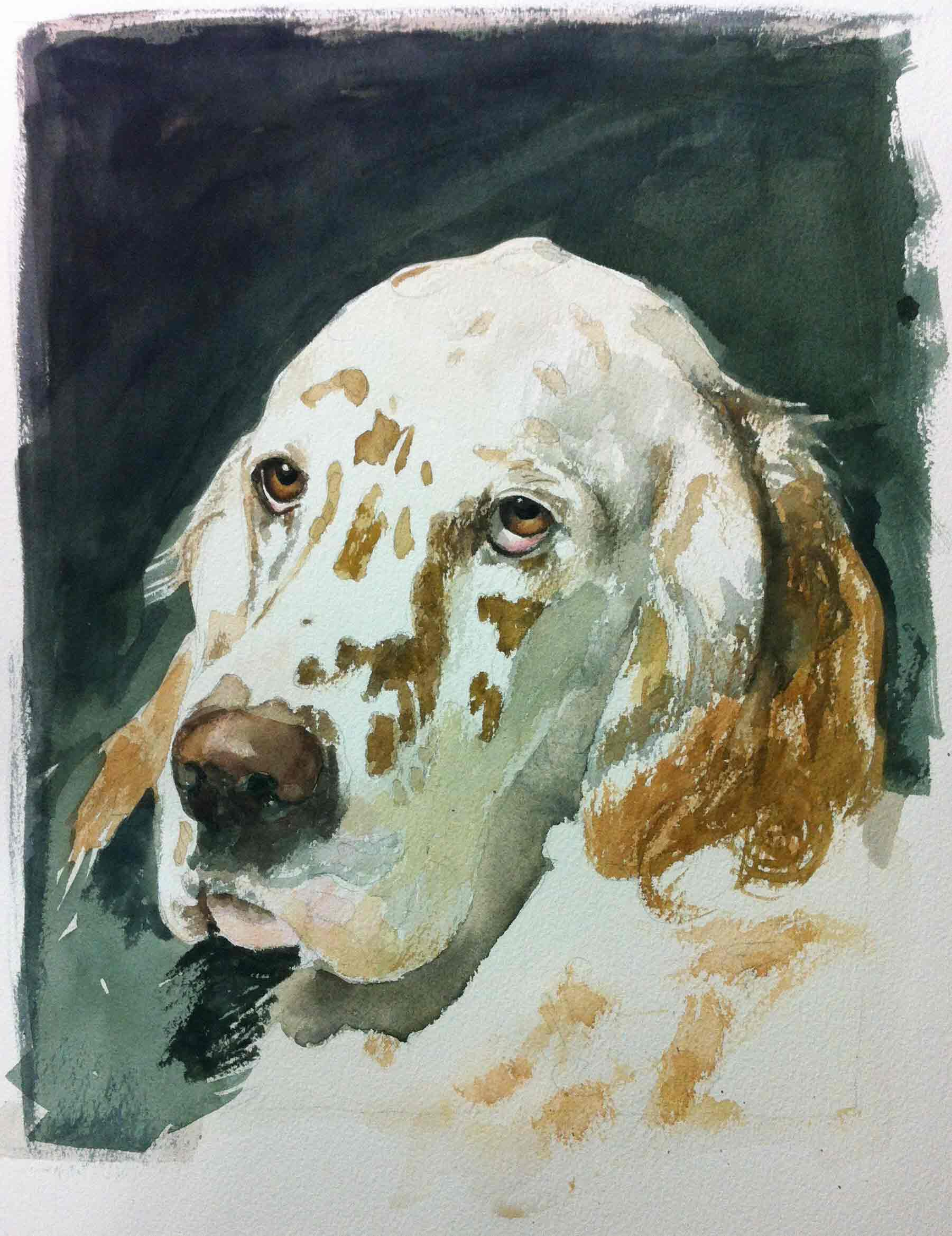 iPhone shot of Trout the Dog a watercolor in progress Dec12/13