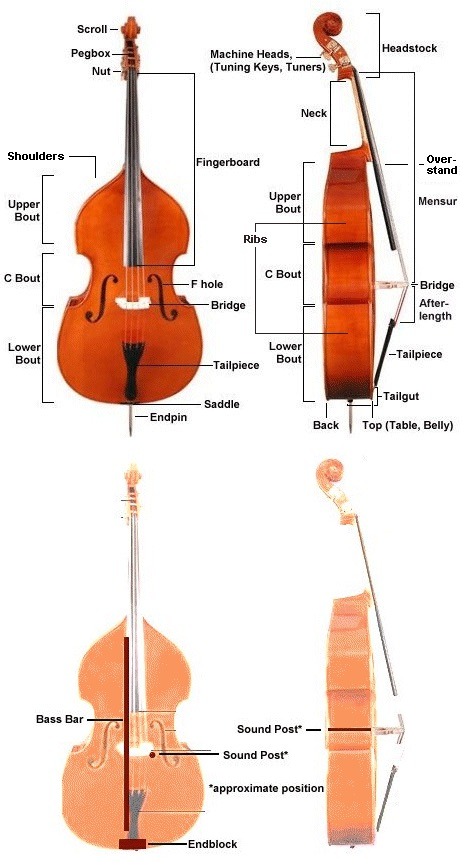 Parts of the upright bass