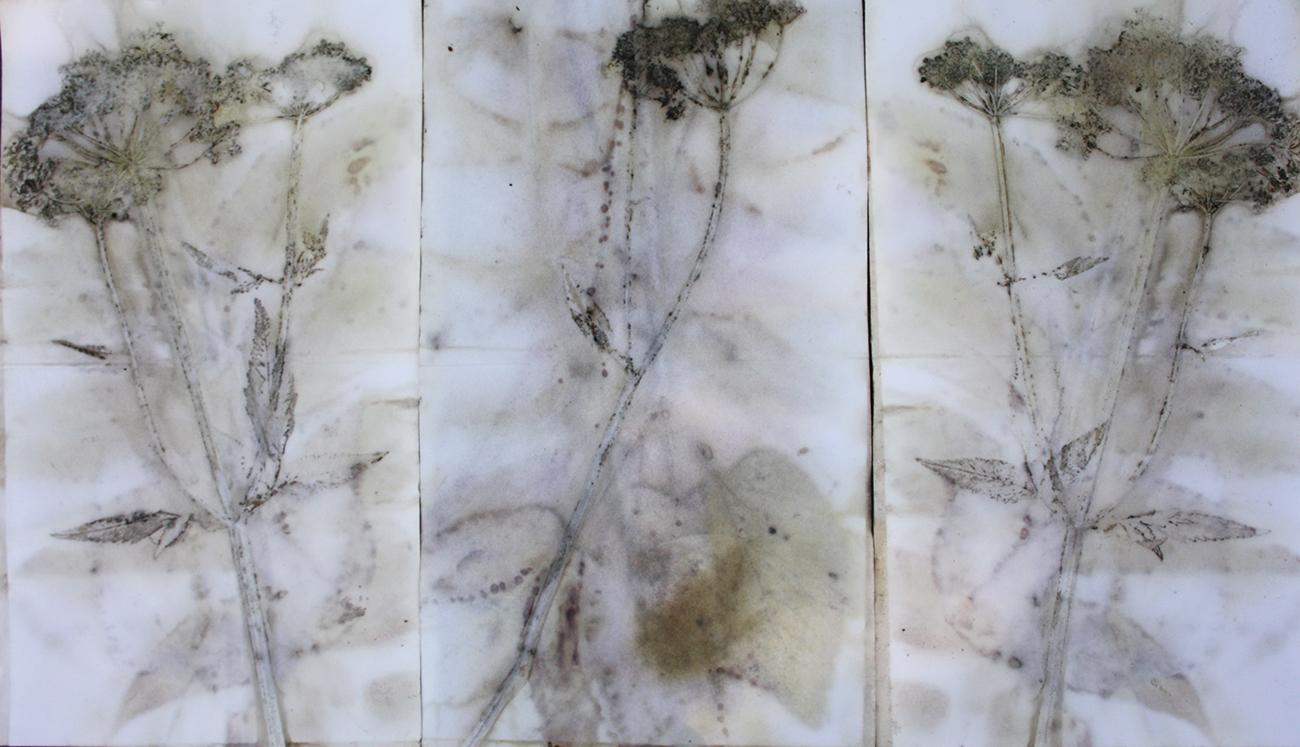 Queen Anne's lace florets