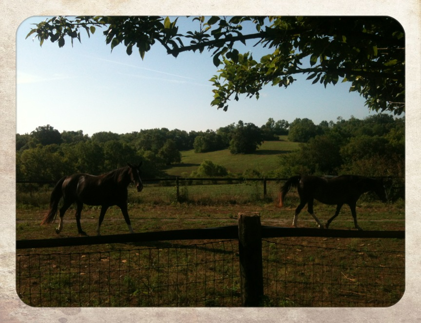 Woodford Reserve, July, 2012