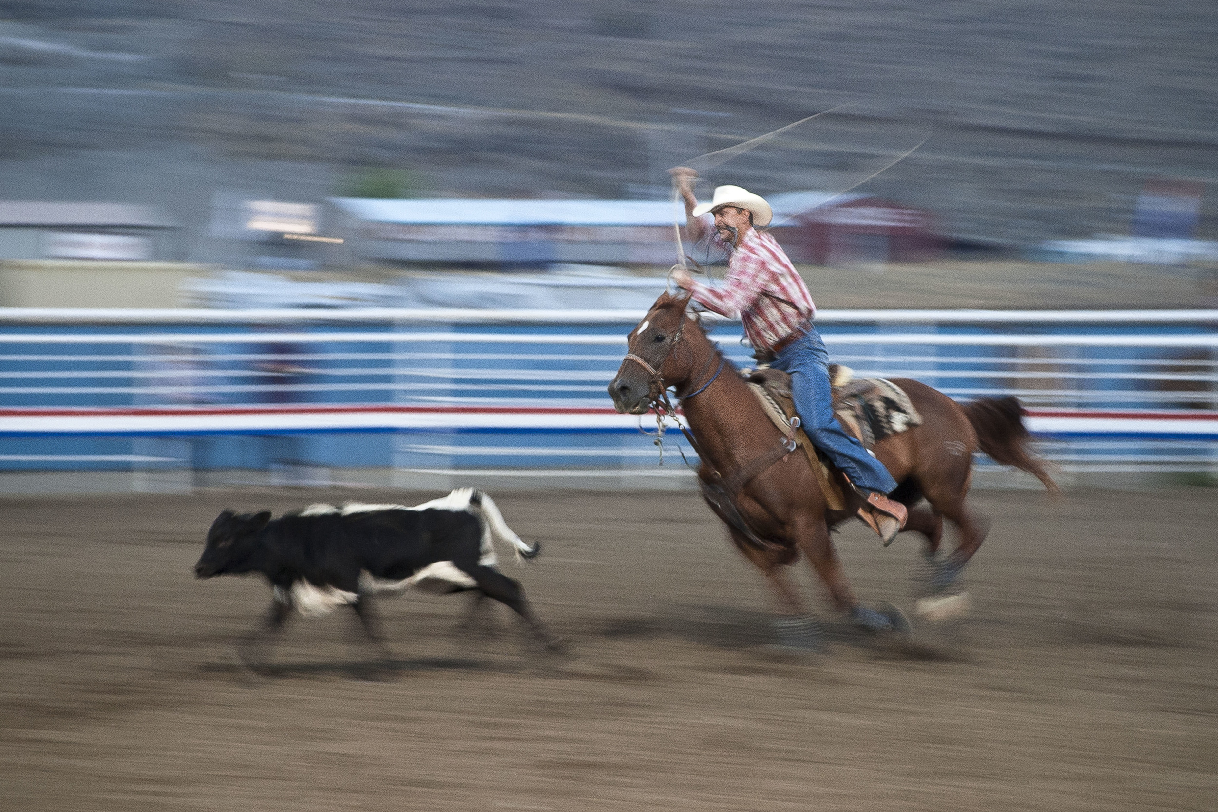 Roping at the Cody Rodeo in Cody, Wyoming.