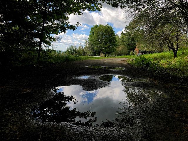 spring— summer .  #vermont #spring #green #reflections #driveway #iphone
