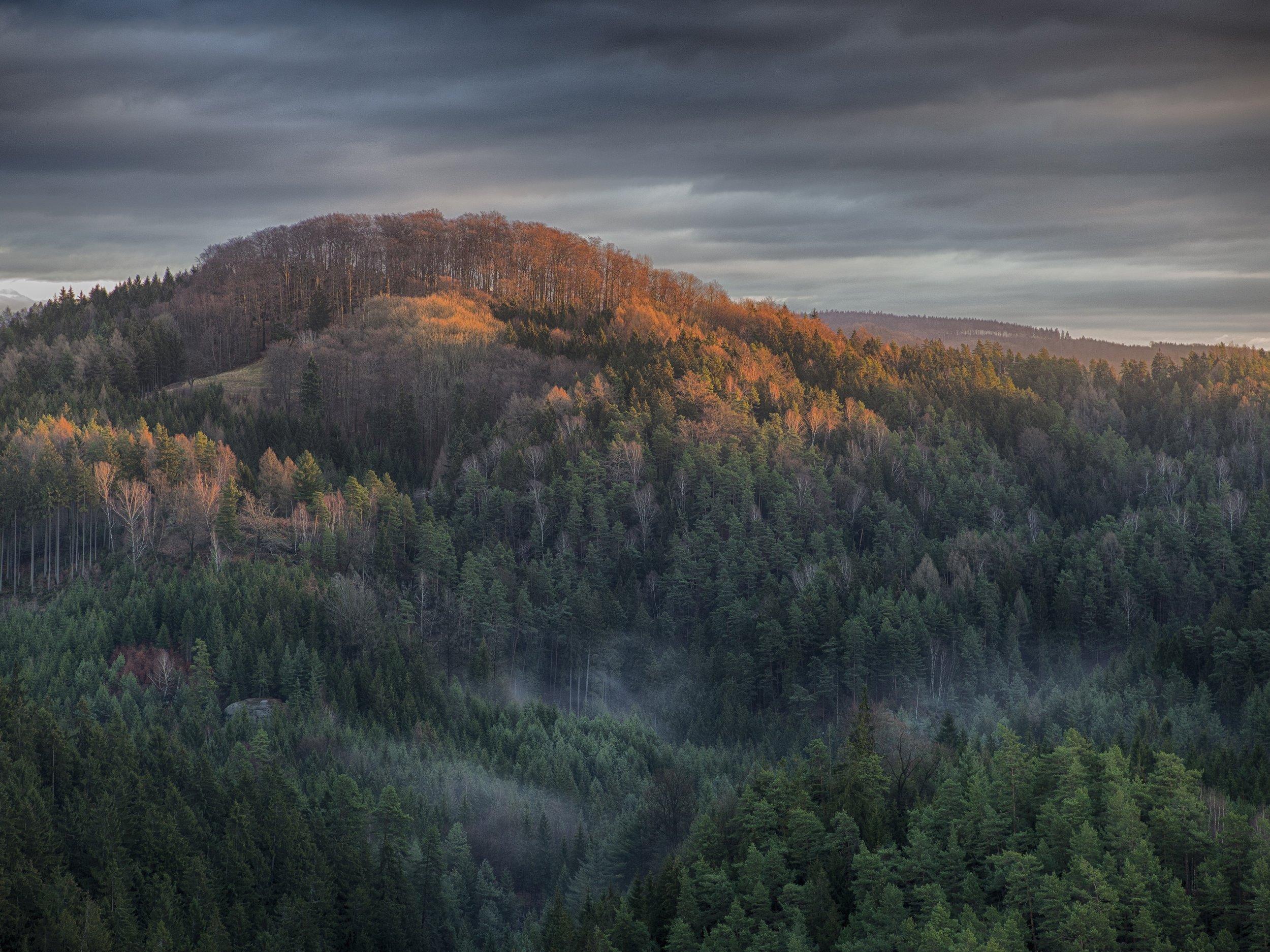 forest-ipad.jpg
