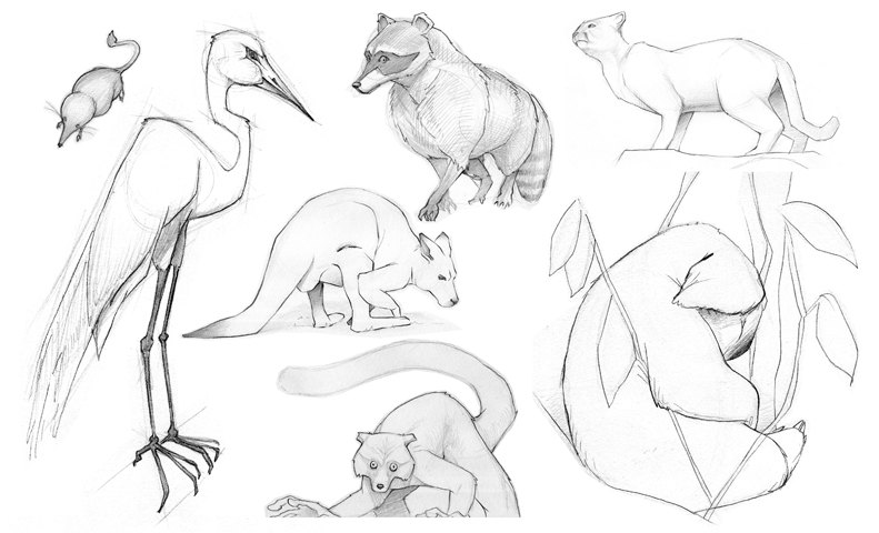 Misc_Animal_Sketches_1.jpg