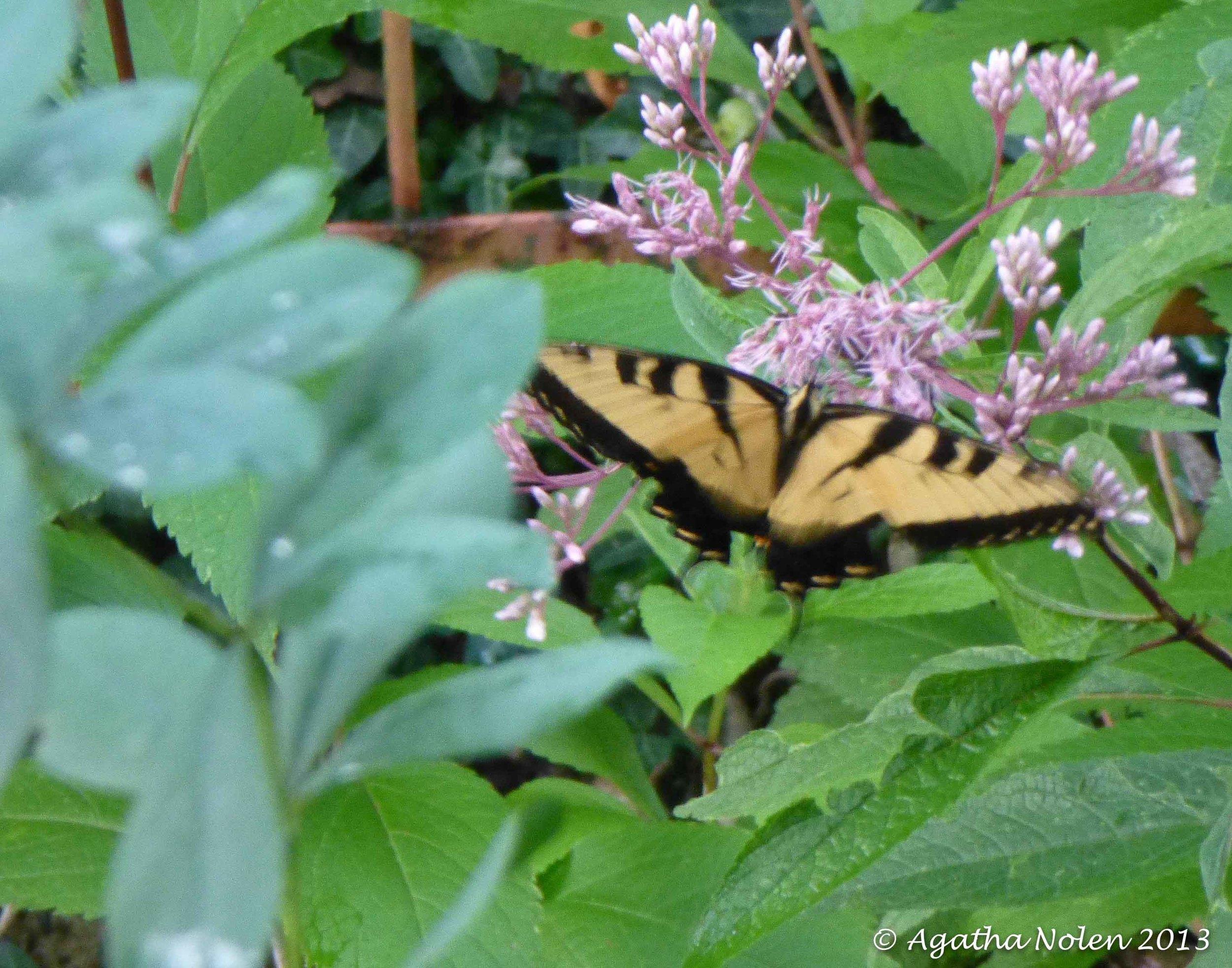 butterfly, cheekwood-nashville.jpg