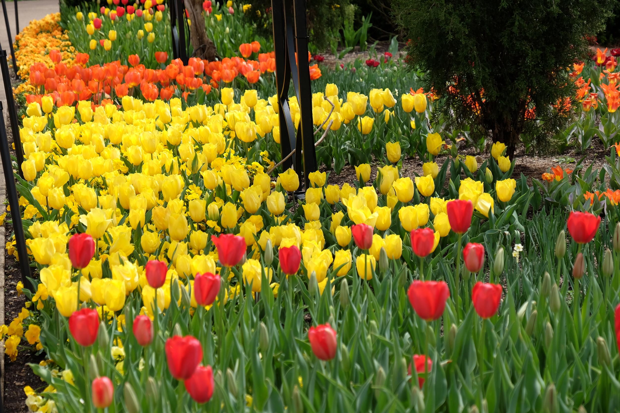 Cheekwood Botanical Gardens, Nashville, TN, 2016