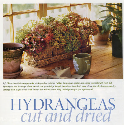 sl dried hydrangeas.jpg