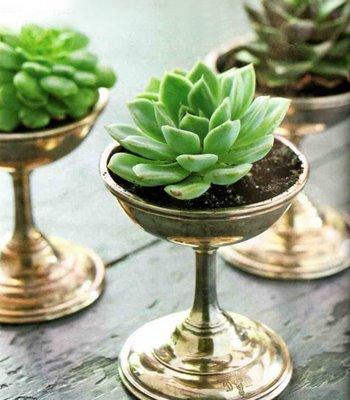 succulents.jpggoogle.jpg