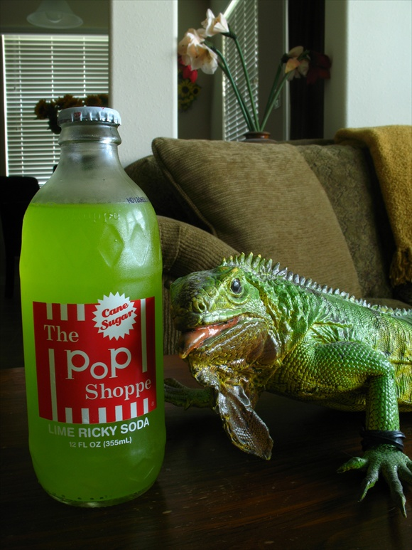 The Pop Shoppe Lime Ricky Soda580.JPG