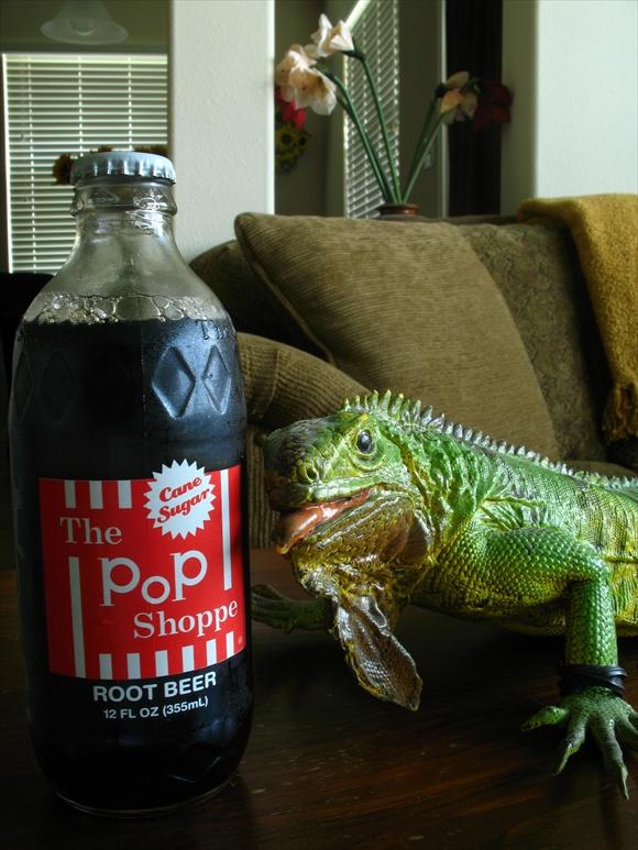 The Pop Shoppe Root Beer580.jpg