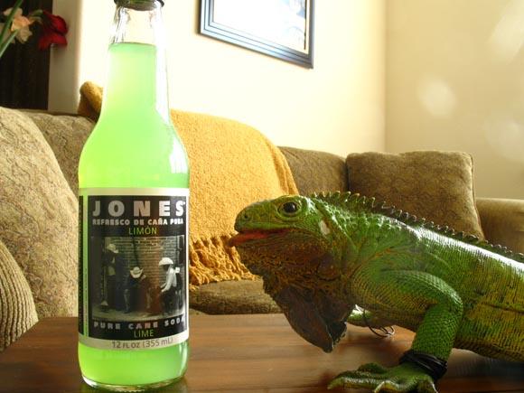 Jones Lime580.jpg