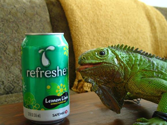 Refreshe Lemon Lime580.jpg