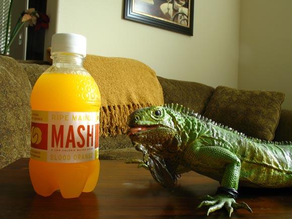 Mash Ripe Mango Blood Orange580.jpg