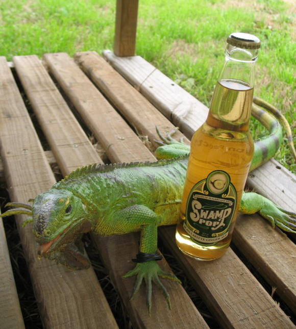 Twist is actually fathered the iguana that traveled with Jean Lafitte. Small world.