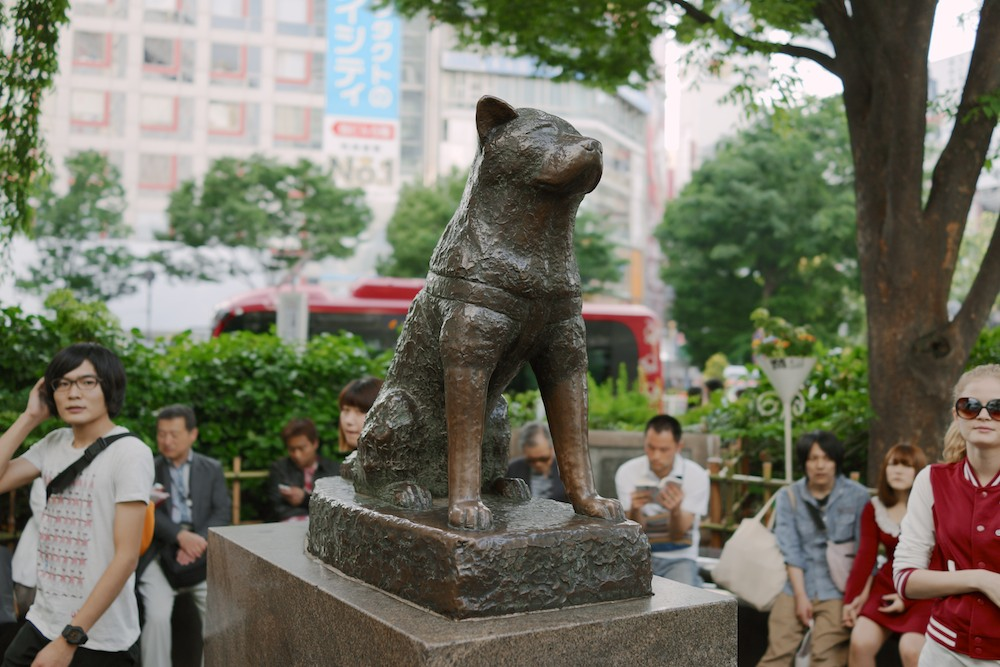 A monument of Hachikō.
