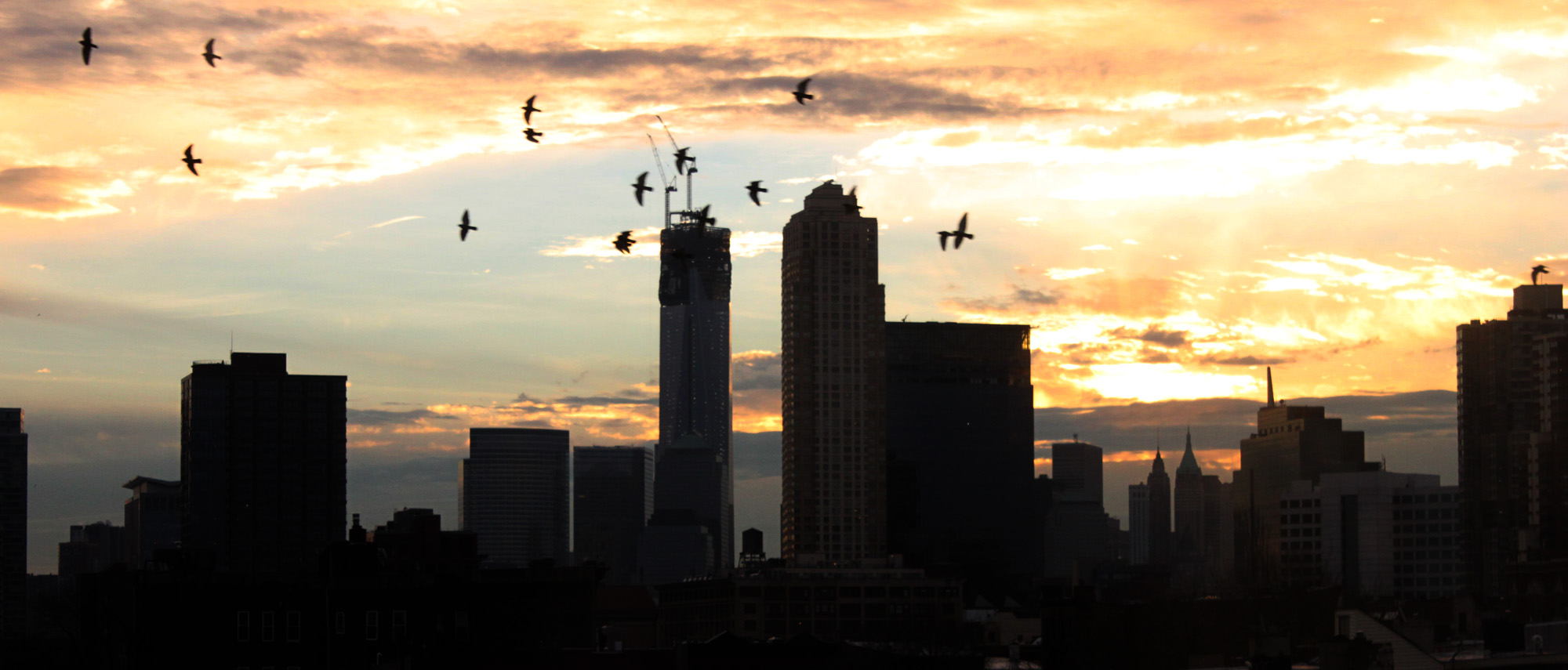 Morning birds and the construction of the World Trade Center, January 17, 2013