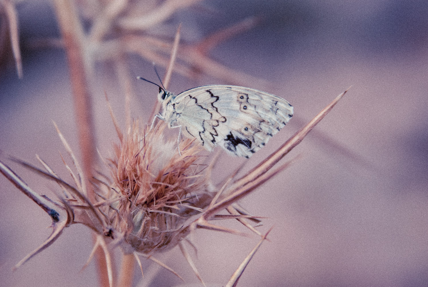 צילום טבע