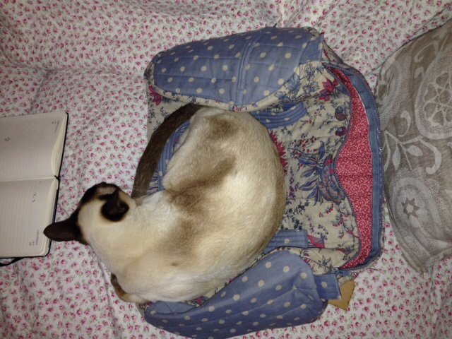 We made Lizzie, who owns the Chateau, a bag which her cat Ven Ven apparently loves and promptly went to sleep in.... No different from Bob really!!!