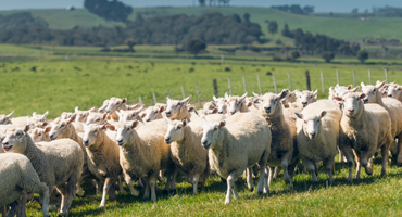 Responsibly sourced   The  finest wool is sourced from farms in the pure, clean environment of New Zealand , focused on providing the best standards in animal welfare and land management