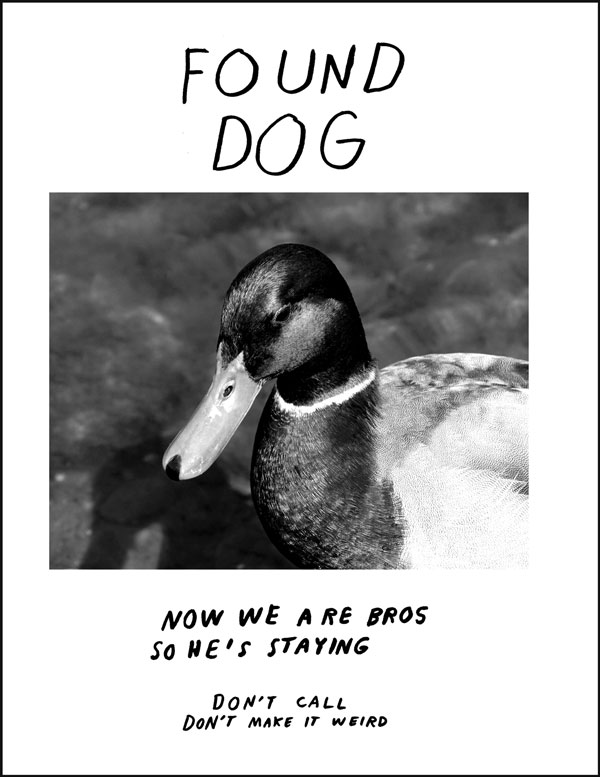 lost-dog.jpeg