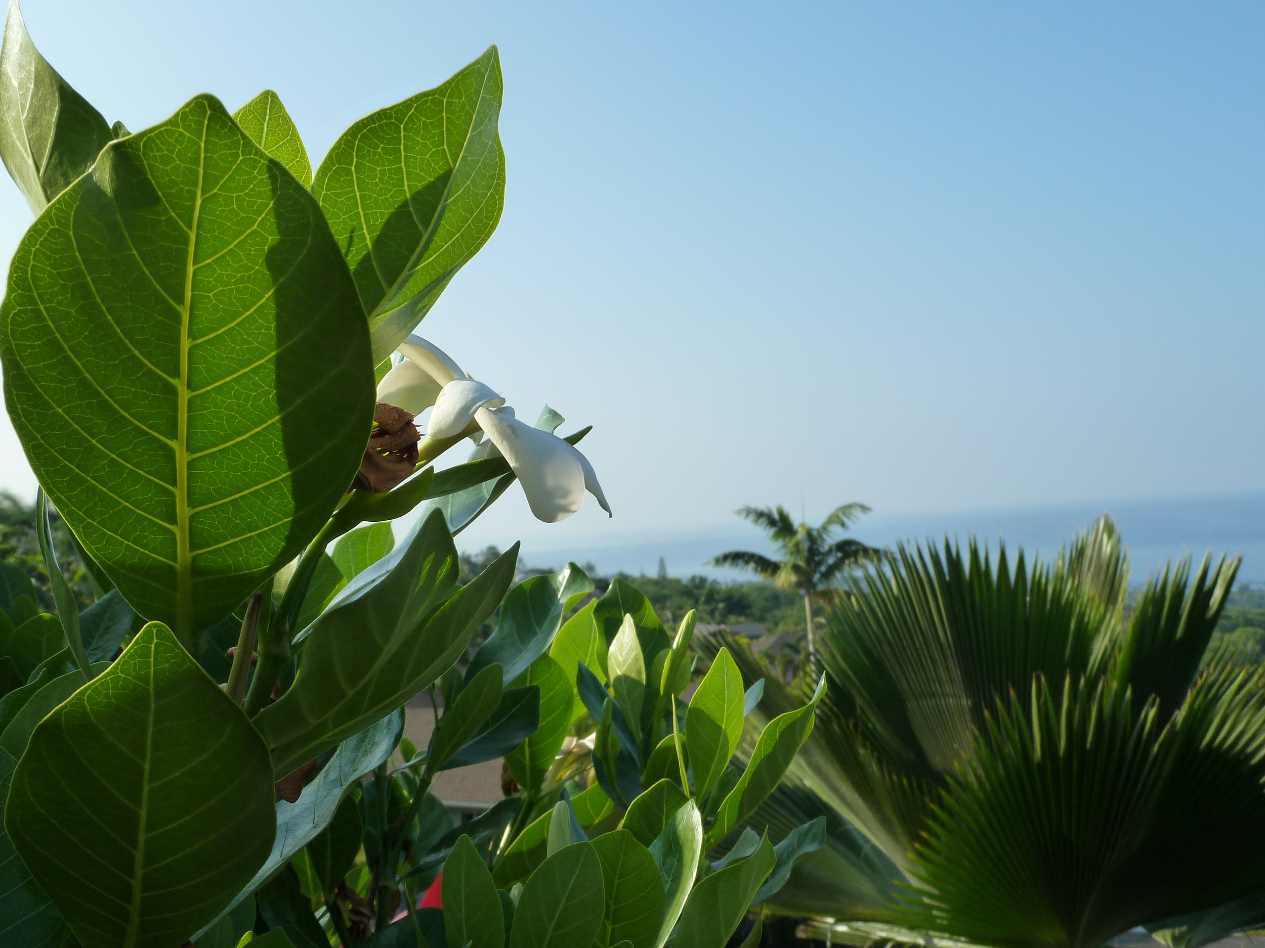 leafgreen.jpg