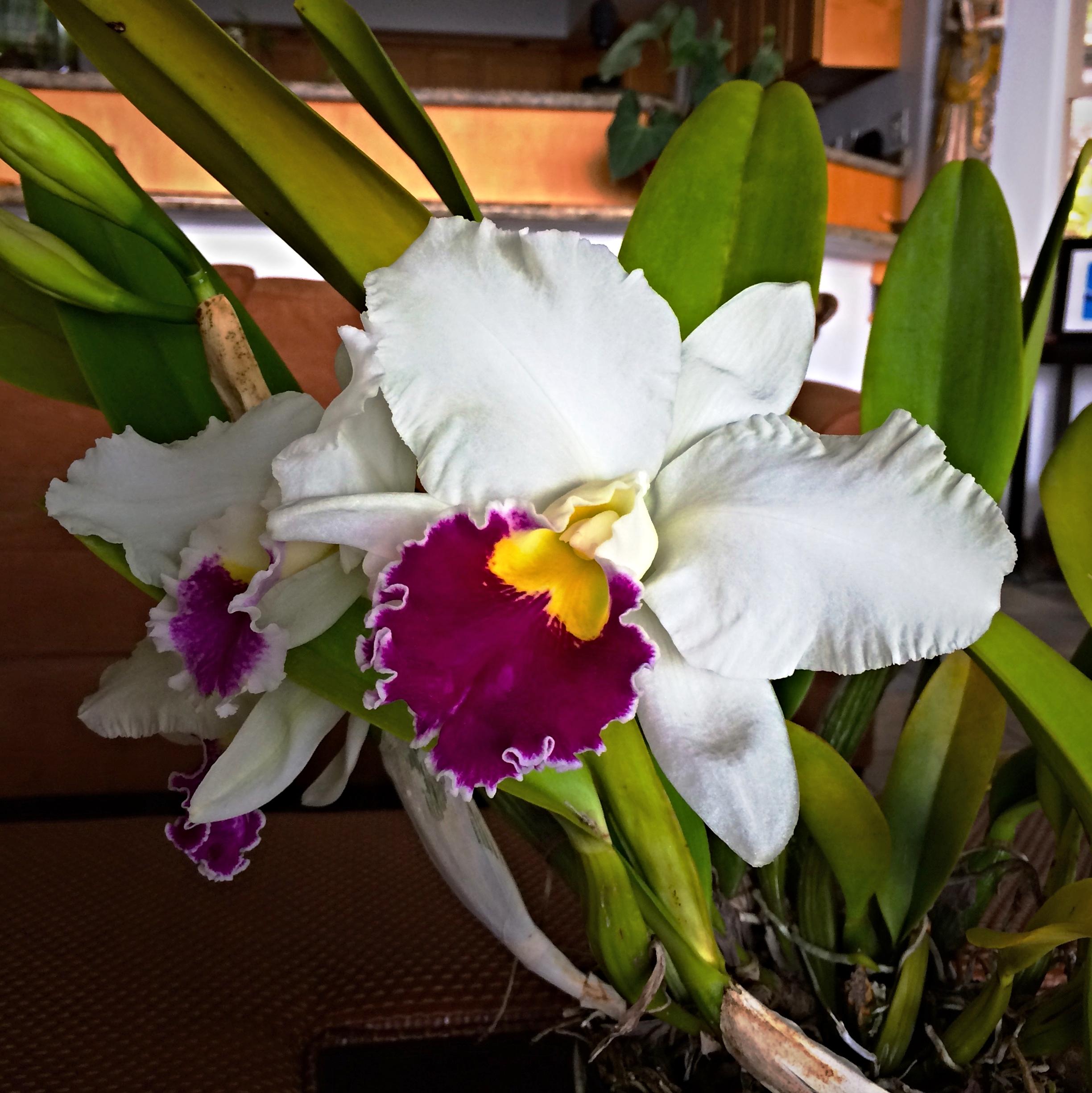 Orchid_surprise.jpg