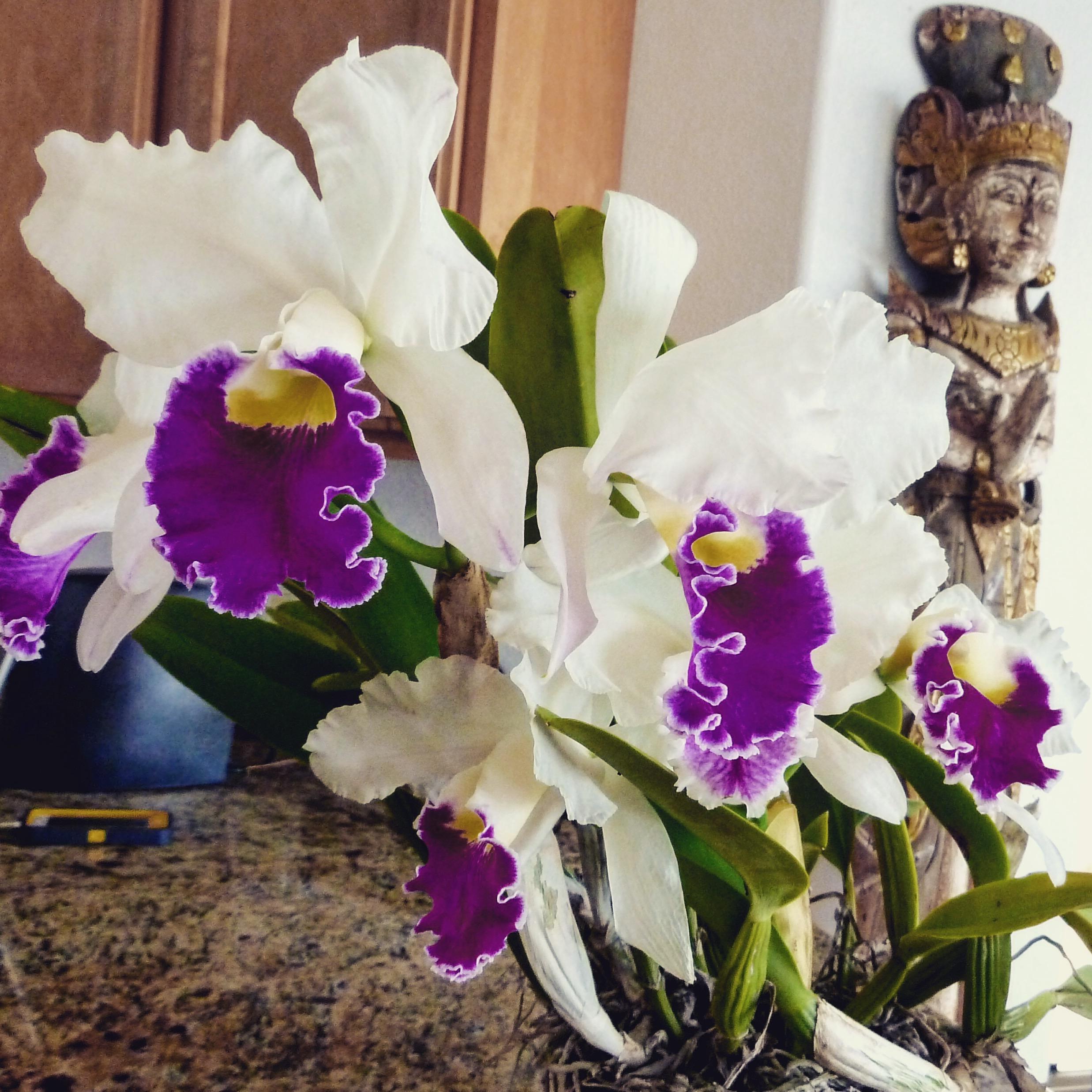 orchids10.jpg