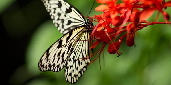 ButterflyRedFlower.png