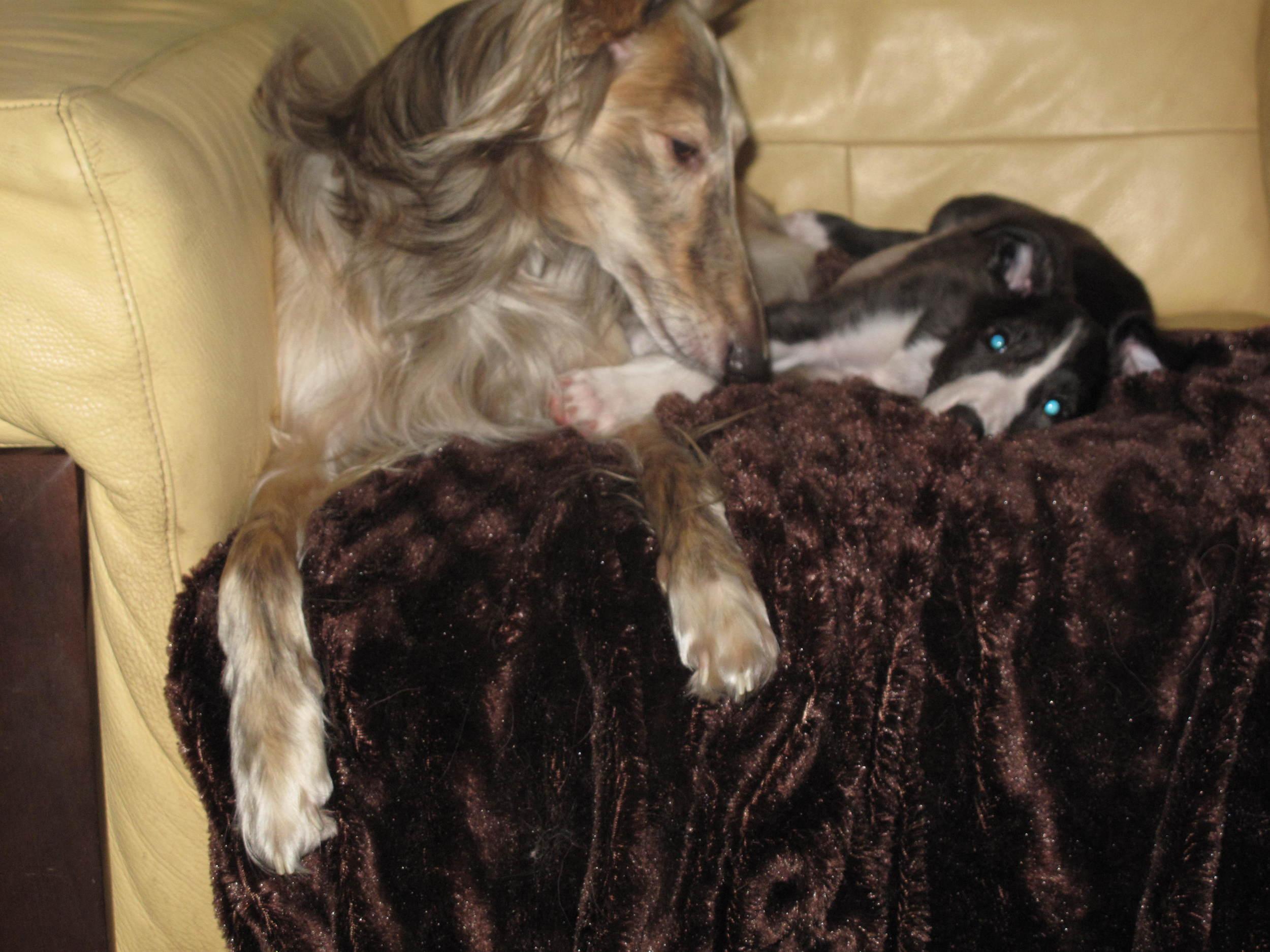puppies 9 weeks 016.JPG