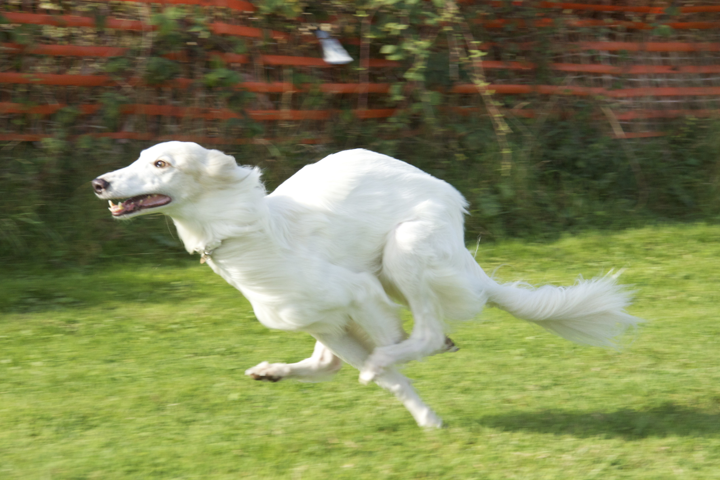 River - Fastest Overall Dog